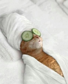 Cat Spa Day ... in NYC of course, at Happy Tails Cat Grooming