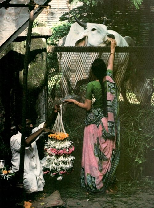 Bruno Barbey 1980 India. A woman feeds a sacred cow.