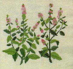 Peppermint and other plants and flowers: schemes for cross-stitching