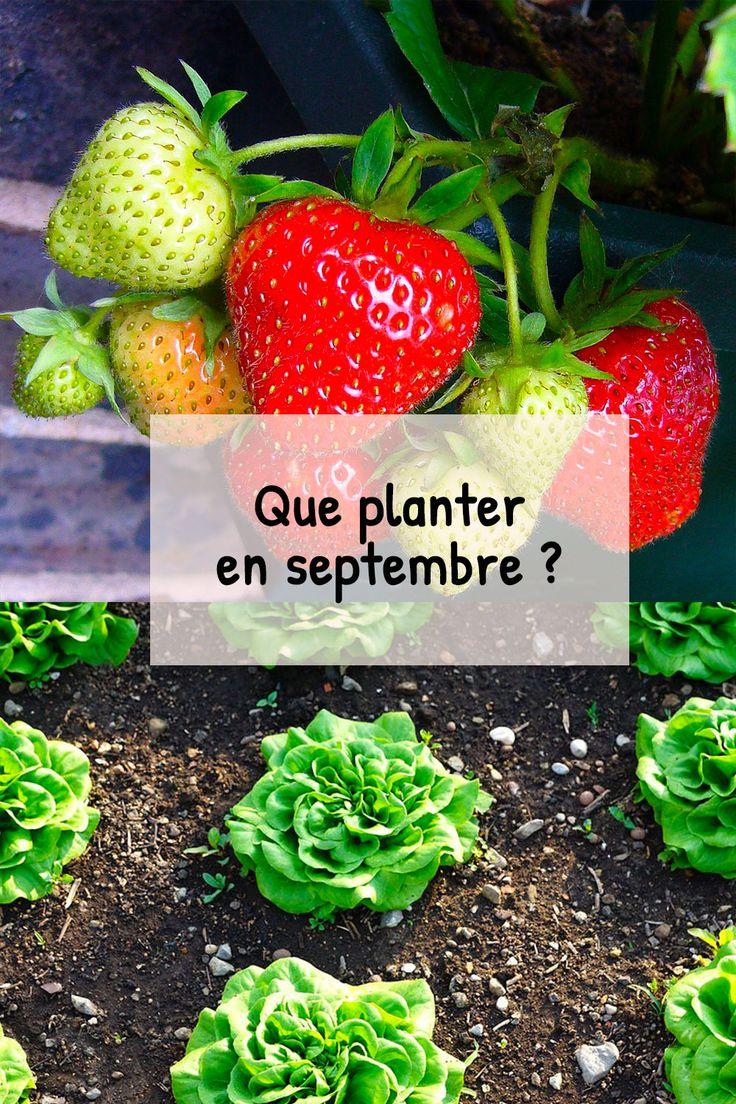 Que planter en septembre au potager? Fiches pratiques du