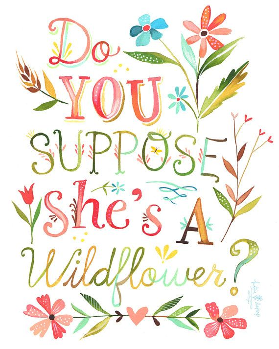 Daisy: do you suppose she's a wildflower?