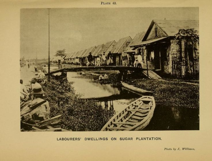 British Guiana Women   ... on a sugar estate in Guiana. From the 1909 Handbook of British Guiana