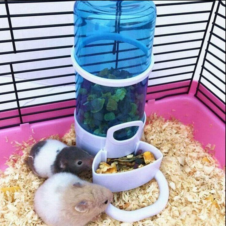 Animal Supplies On Sale In 2020 Small Pets Pet Feeder Food Animals