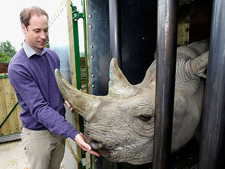 Awww! Prince William hand-feeds a rhino!  Read more: http://www.people.com/people/package/article/0,,20395222_20605295,00.htmlRoyal Families, Wild Animal, Prince Williams, Black Rhino, Royal Wedding, Animal Parks, Rhino Poached, Cambridge, Port Lympne