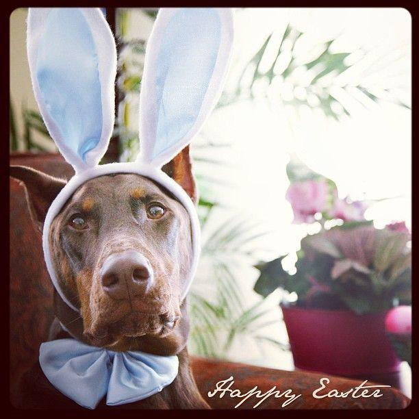 Easter Dobe 2013