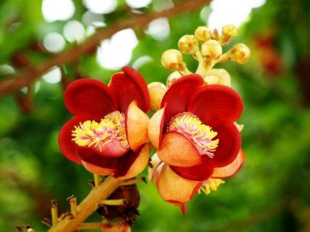 Cute wild flowers - leaves, stem, green, red