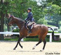 Teach an off-the-track Standardbred how to canter, step by step.