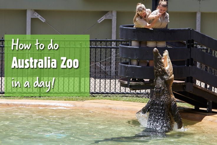 Crikey! Use this awesome itinerary and map from a die-hard wildlife fan next time you visit Australia Zoo. (scheduled via http://www.tailwindapp.com?utm_source=pinterest&utm_medium=twpin&utm_content=post564065&utm_campaign=scheduler_attribution)
