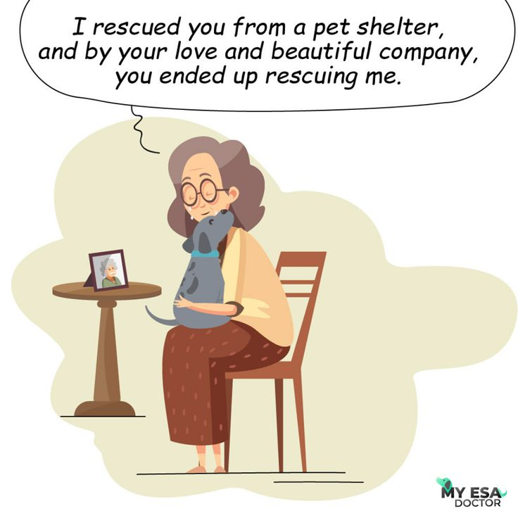 41++ Who can provide a letter for an emotional support animal trends