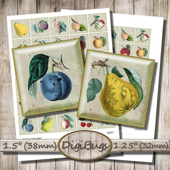 Vintage Fruit Illustrations, Digital Collage Sheet, 32 mm, 38 mm Squares, Printable Images, 1.5 inch Squares, Instant Download, b8