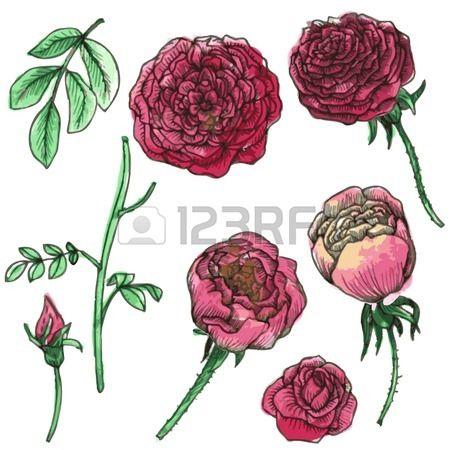 Ms de 25 ideas increbles sobre Fotos rosas rojas en Pinterest