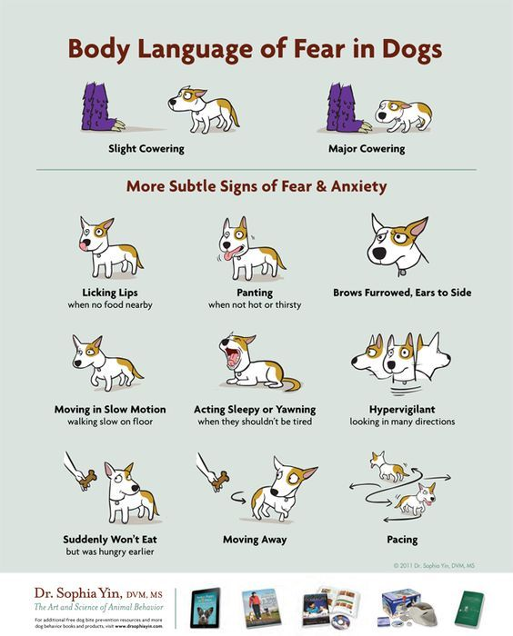 How to recognize body language of fear in dogs - teaching kids how to interact with dogs. @LolaThePitty Poster Via Dr. Sophia Yin