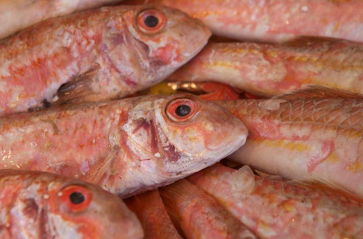 Pescado azul para controlar el colesterol