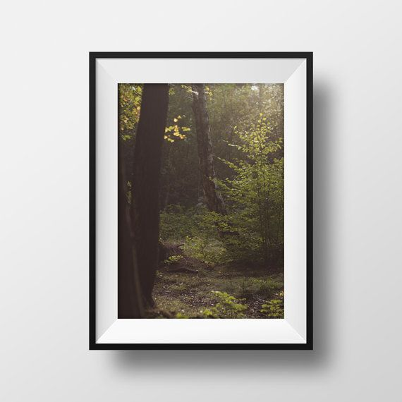 Nature forest photography prints wood fine art by BonVoyageStudio