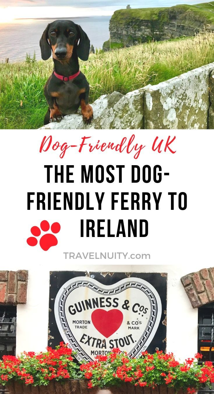 The Most Dog Friendly Ferry To All Of Ireland Dog Friends