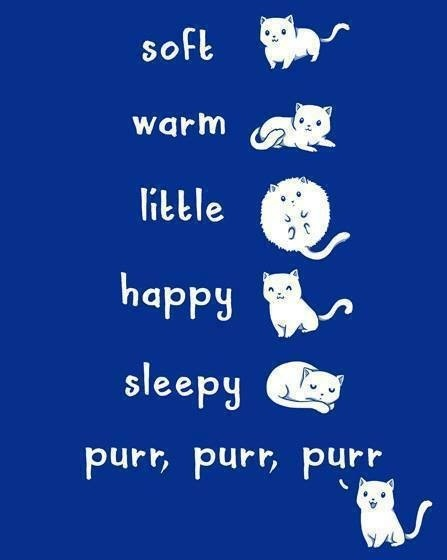 soft kitty, warm kitty, little ball of fur, happy kitty, sleepy kitty, purr purr purr...