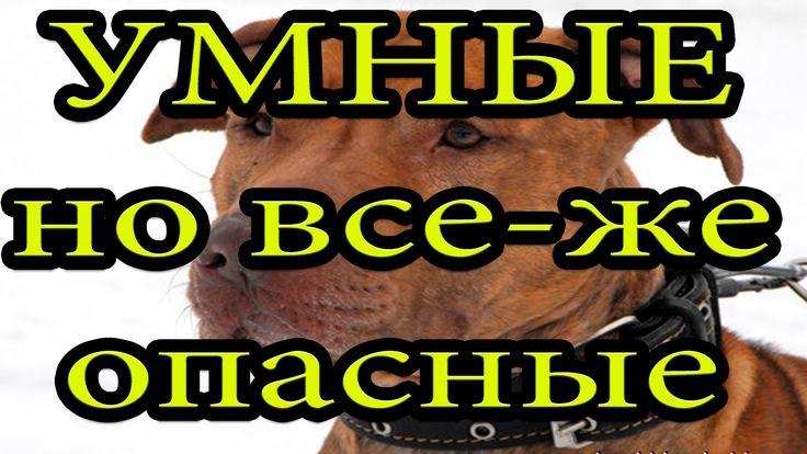 Собаки видео Смешные (2 УМНЫЕ собаки) Классное видео