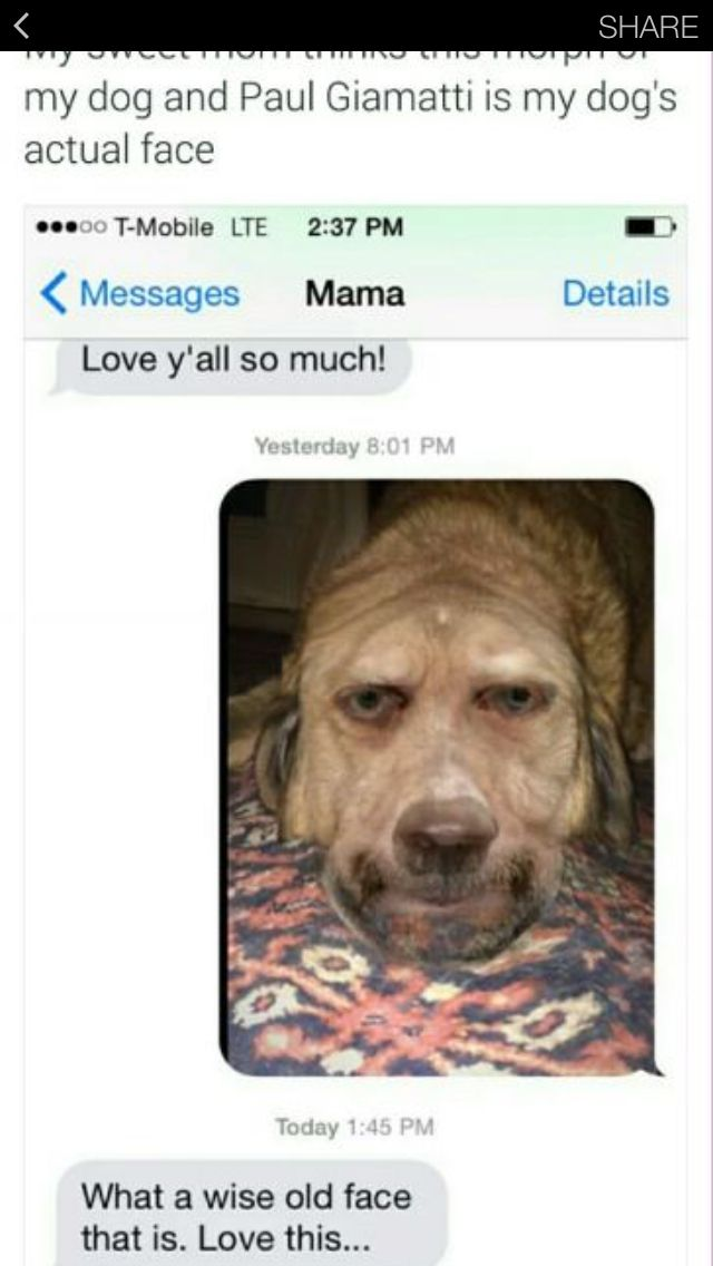 Best Giggles Images On Pinterest Dankest Memes Funny Text - Dogs able text 30 hilarious texts dogs
