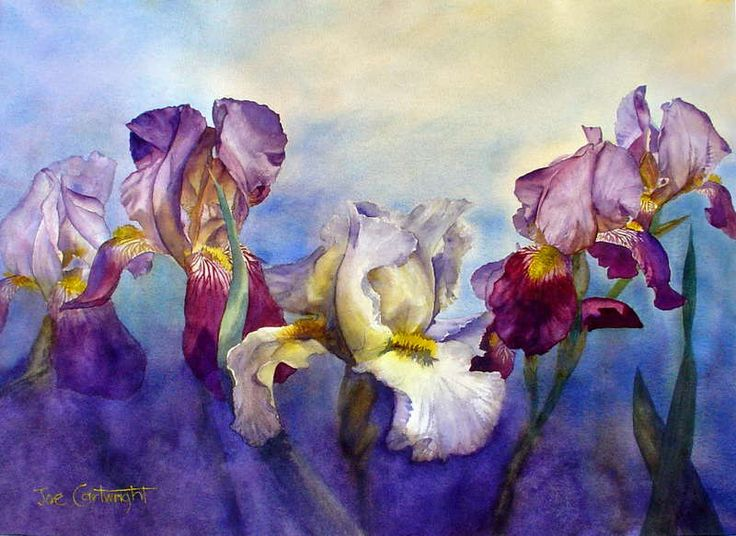 Irises watercolor painting by Joe Cartwright. White and dark flowers
