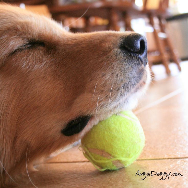 How to make sure no one steals your ball while you nap!
