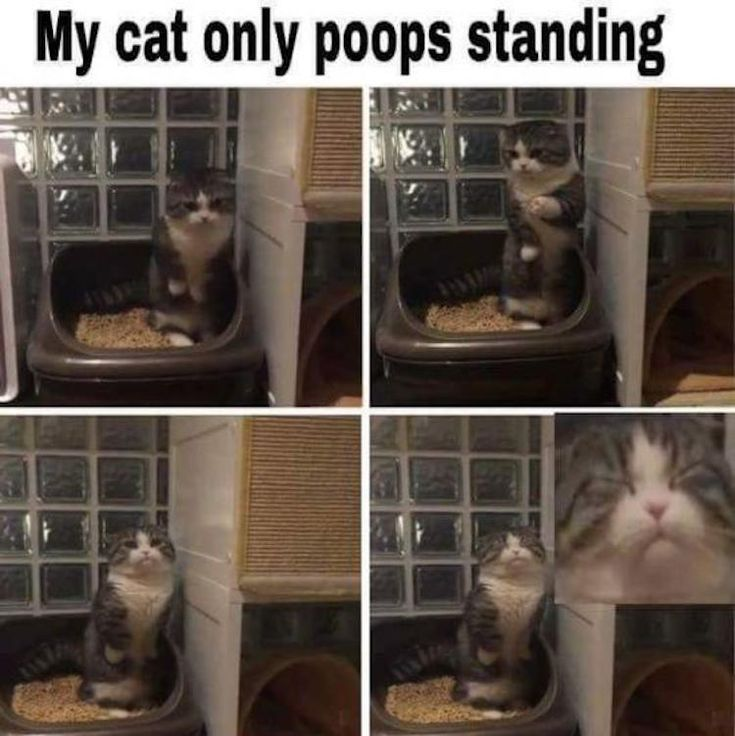 Funny Animal Memes Of The Day 23 Pics