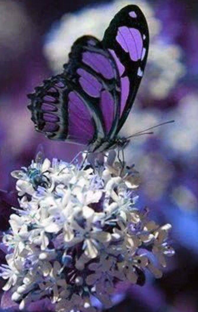 33 besten pink butterflies bilder auf pinterest for Blumen fliegen