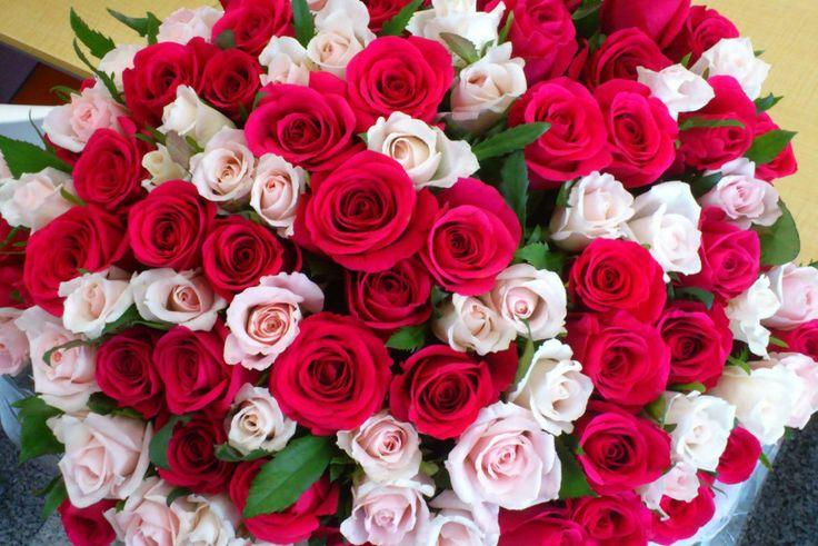 Перед 8 марта саратовец украл 50 роз и подарил их незнакомкам.  В Саратове в канун 8 марта в отдел полиции обратилась сотрудница одной из точек по продаже цветов. Она рассказала, что вечером неизвестные злоумышленники разбили стекло торгового павильона и похитили 25 белых и 25 красных роз общей стоимостью около 3 тысяч рублей. По факту кражи было возбуждено уголовное дело.  Подозреваемый был задержан при помощи служебно-розыскной собаки.  «Задержанный пояснил, что подарил 50 роз двум…