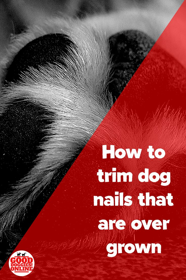How to trim dog nails that are overgrown trimming dog