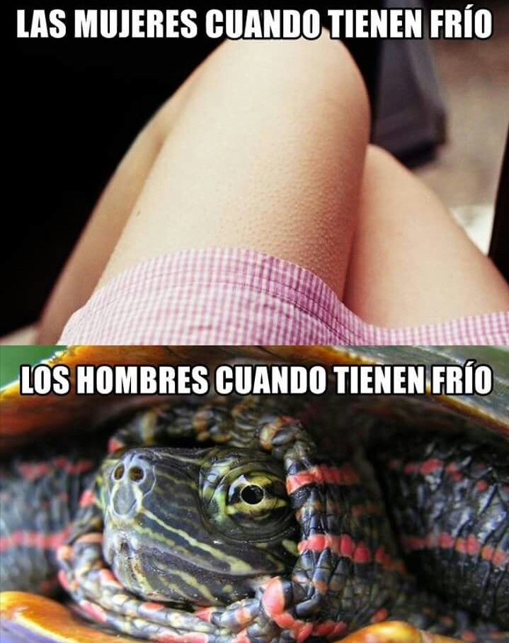 Pin De Alejandra Torres En Ale 3 Imagenes Chistosas Chiste Meme Memes Gracioso