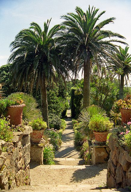 Tresco Abbey Gardens, Scilly Isles, UK | A superb Sub-Tropical Garden (7 of 12) by ukgardenphotos, via Flickr, due to it's mild climate sub tropical plants flourish