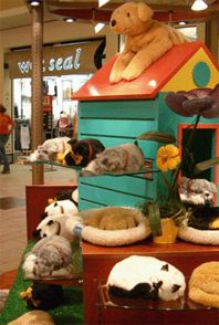 use pegboard or slat wall to make dog house, use for display