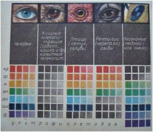 Цветное видение человека и животных