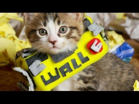 Disney Pixar's 2008 Animated Film 'WALL-E' Remade with Cute Costumed Kittens