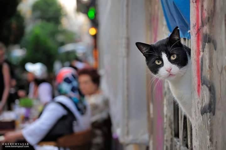 .İstanbulun Kedileri... MODA..Güzeli....