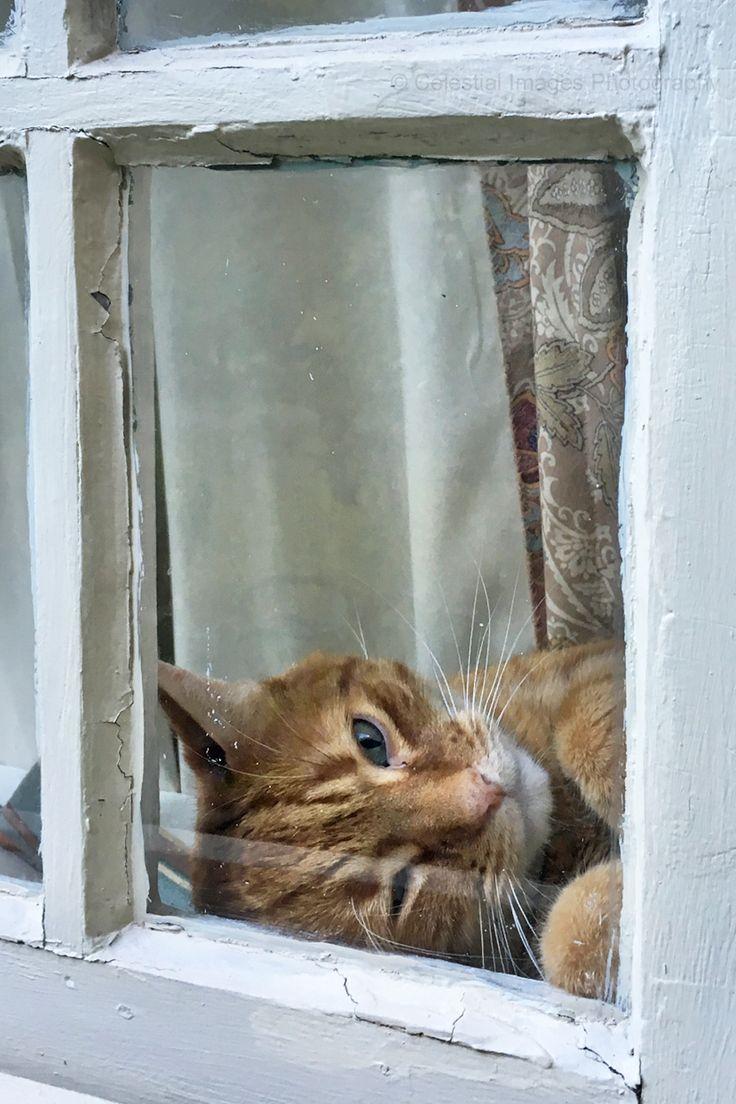 17 meilleures id es propos de ana rosa sur pinterest for Agrandir fenetre windows