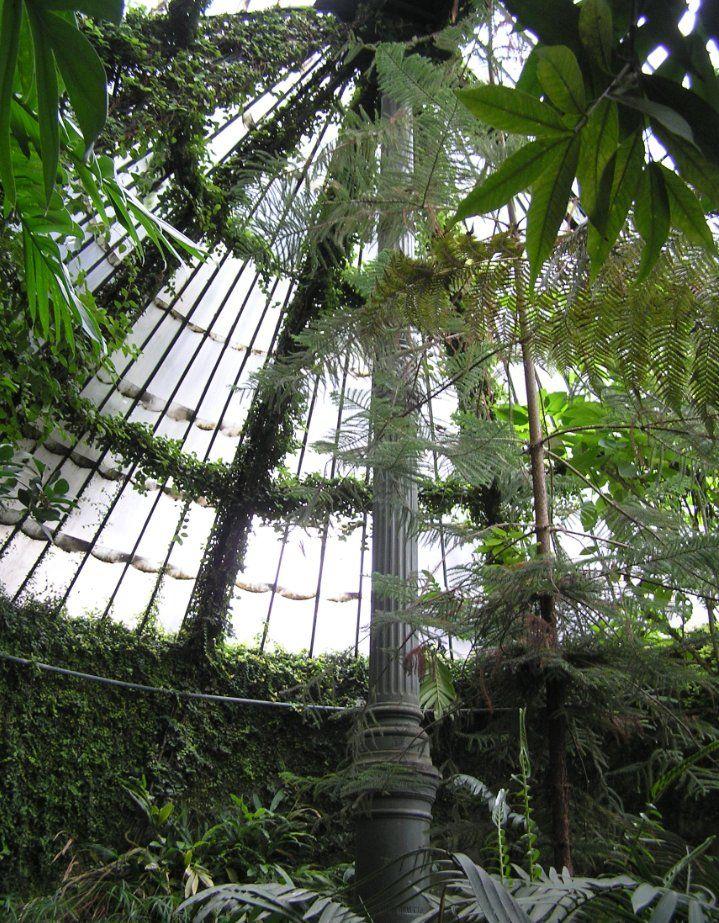 Estufa de las palmas del real jard n bot nico trees and - Jardin botanico las palmas ...
