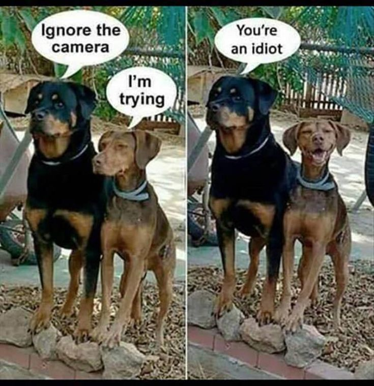 Funny Animal Picture Dump Of The Day 24 Pics #puppyshaming