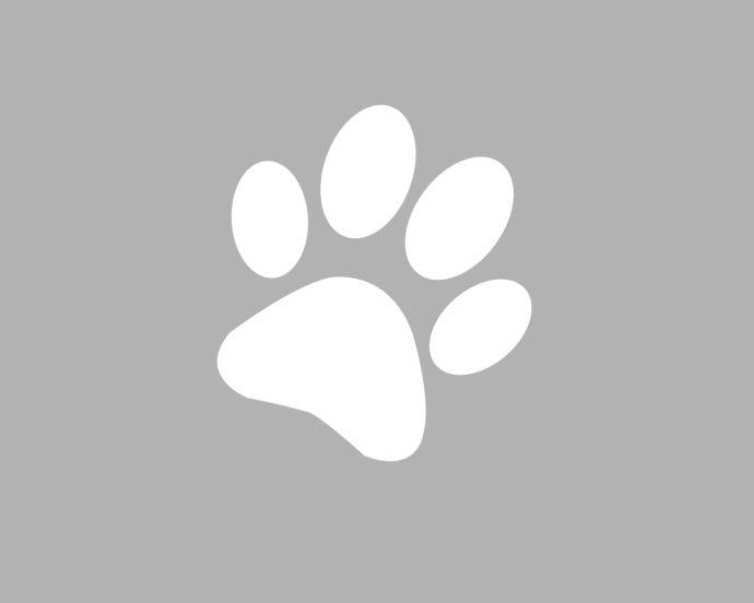 Tutto sul gatto: L'app per tutti coloro che amano il mondo dei gatti (Gratis) http://www.sapereweb.it/tutto-sul-gatto-lapp-per-tutti-coloro-che-amano-il-mondo-dei-gatti-gratis/        Dallo stesso sviluppatore di Tutto sul cane (Tutto sul cane: L'app per tutti coloro che amano il mondo dei cani (Gratis)), ecco arrivare Tutto sul gatto, la versione dedicata agli amanti dei gatti.  Tra le caratteristiche presentiall'interno dell'applicazione...