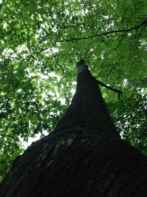 "WINNER!   By Renee, ""In the forest behind our house in Barrhaven - photo 2"""