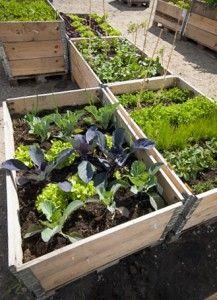 Pallkrage för odling av grönsaker