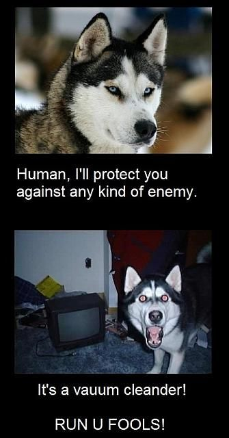 This is how my dogs act!!