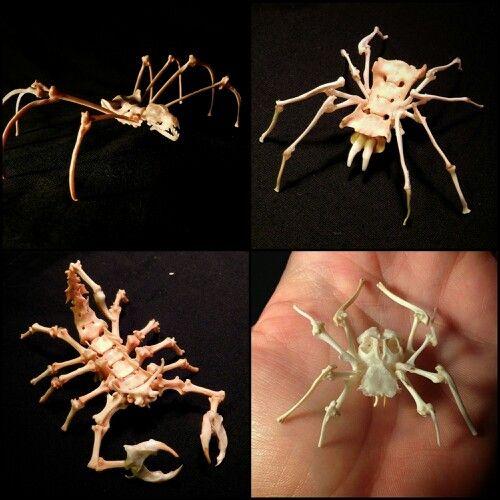 https://i.pinimg.com/736x/57/25/47/5725471c67e1b949b6a5f7adc98d4523--spiders-bones.jpg
