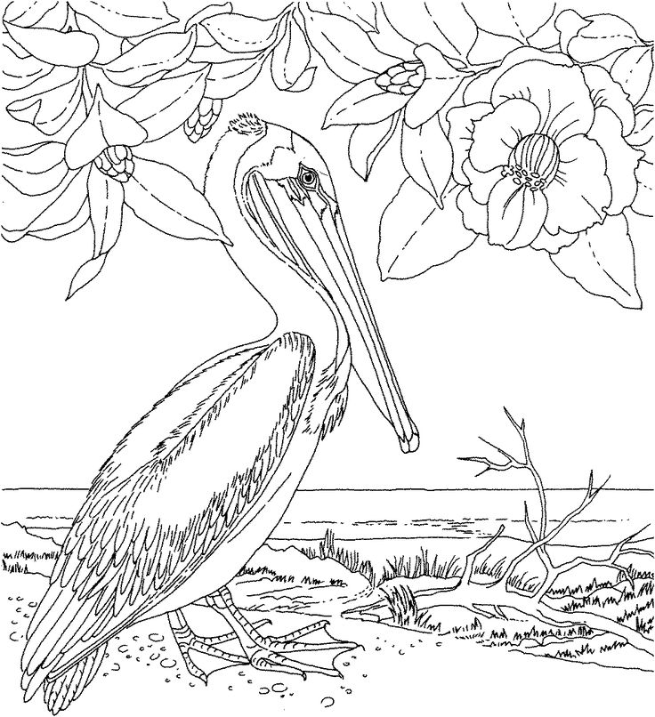 609 best ПАСХА Раскраски images on Pinterest Coloring books - copy northern mockingbird coloring pages