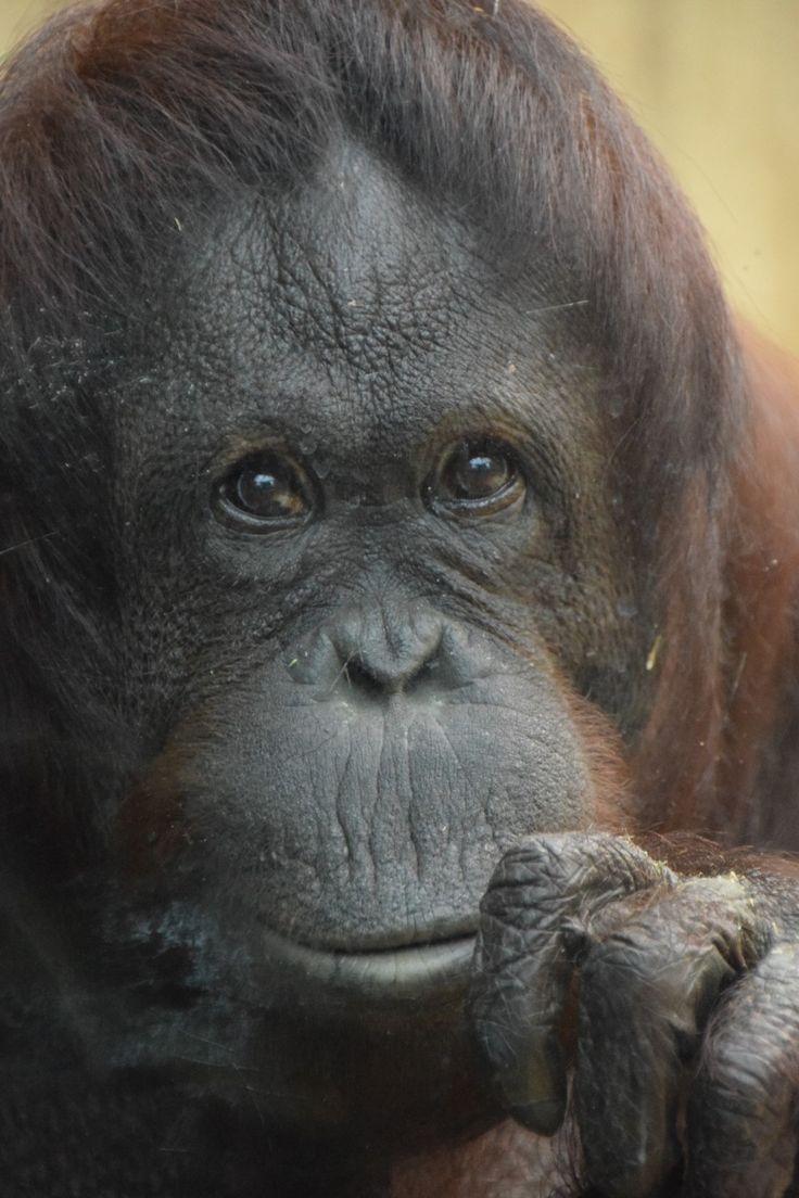 Pretty shaved ape photos — photo 7