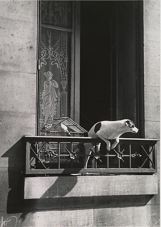 Andre Kertesz. The Concierge's Dog, Paris, 1929