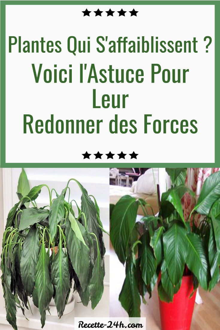 Epingle Sur Plantes