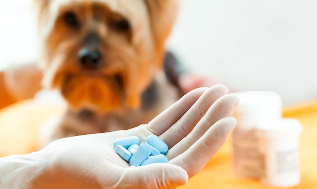 Natural Cure For Dog Incontinence