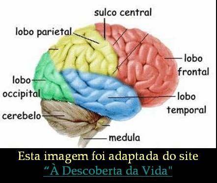 sistema nervoso endocrino