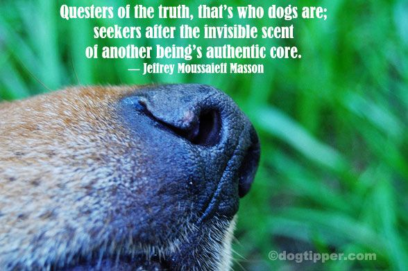 Questers of the truth, that's who dogs are; seekers after the invisible scent of another being's authentic core.  ~Jeffrey Moussaleff Masson