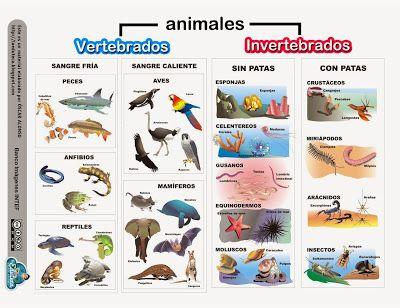 RECURSOS PRIMARIA | Esquema sobre los animales vertebrados e invertebrados ~ La Eduteca